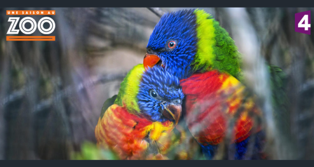 Week end pour 2 adultes et 2 enfants au zoo de la fl che - Echantillon gratuit de couche pour adulte ...