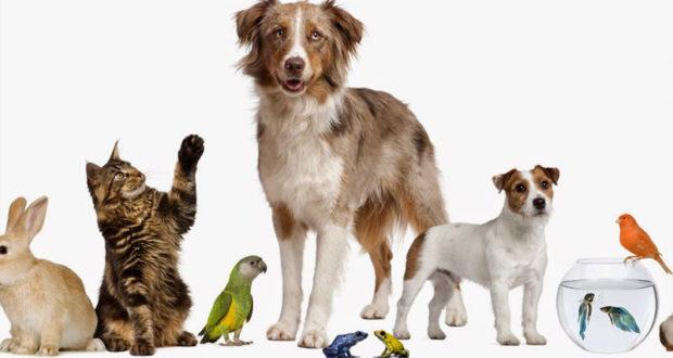 image animaux gratuite