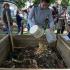 Composteurs de jardin et d'appartement gratuits
