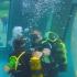 Des baptêmes de plongée gratuits à la Gèmerie