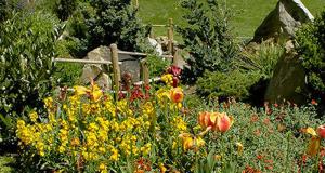 Distribution gratuite de plantes - Choisy-le-Roi