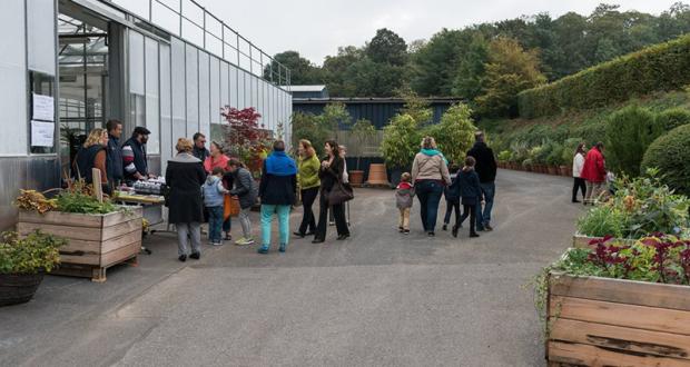 Distribution gratuite de bulbes - Versailles
