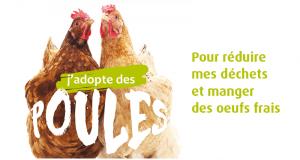 Adoptez deux poules gratuitement pour la réduction des déchets