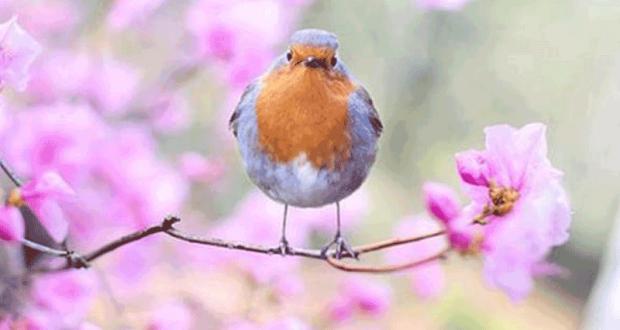 Atelier gratuit de découverte des oiseaux du Jardin des Plantes