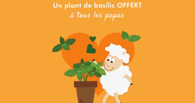 Distribution Gratuite de Plants de Basilic Bio