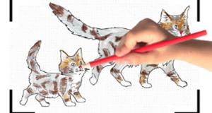 Recevez gratuitement votre cahier de dessin Royal Canin