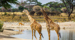 Voyage en Tanzanie pour 2 personnes (10000 €)