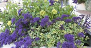 Distribution gratuite de plantes vivaces