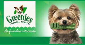 Échantillons gratuits Greenies Teenie pour chien de 2 à 7kg