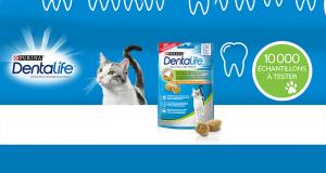 10 000 échantillons gratuits de friandises Dentalife pour chats