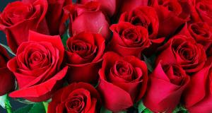 Distribution gratuite de roses dans plusieurs stations de Métro