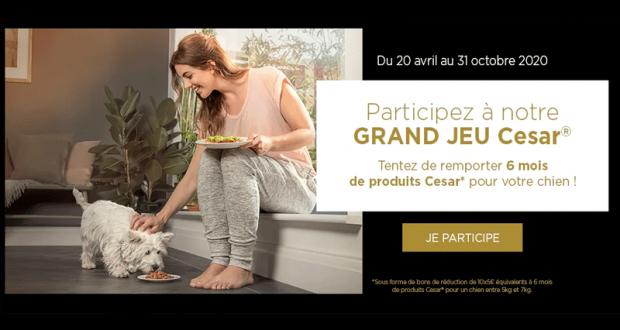 2000 lots de 50 euros d'alimentation pour chien offerts