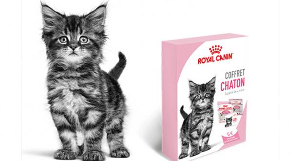 Recevez gratuitement un Coffret chaton Royal Canin