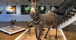 Entrée gratuite au Muséum d'Histoire Naturelle en nocturne