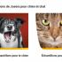 Échantillons gratuits de Josera pour chien et chat