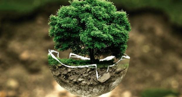 Distribution gratuite d'arbres & d'arbres fruitiers