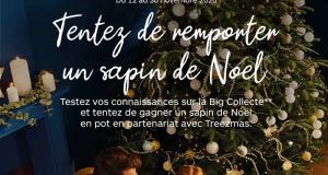 20 sapins de Noël en pot offerts
