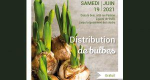 Distribution Gratuite de Bulbes de Tulipes