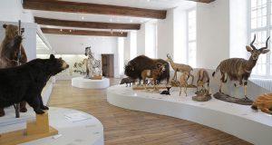 Entrée Gratuite dans tous les Musées - Troyes