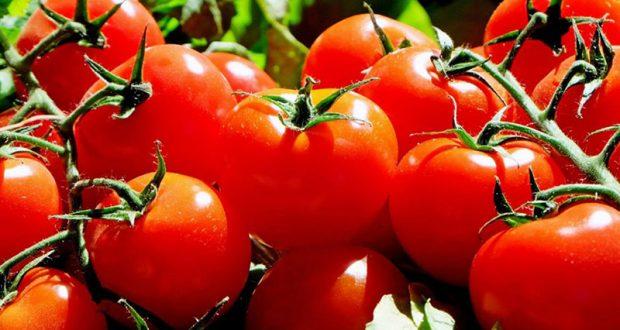 Distribution gratuite de Tomates bio en libre service