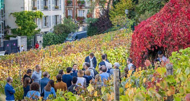 Visite gratuite de la Vigne du Clos Montmartre