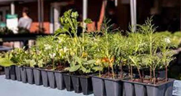 Distribution Gratuite de plantes